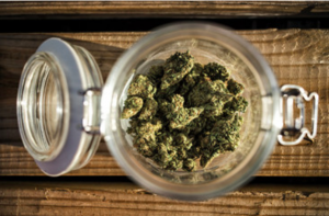 7 High-Energy Cannabis Strains To Help You Get Active And Fight Fatigue