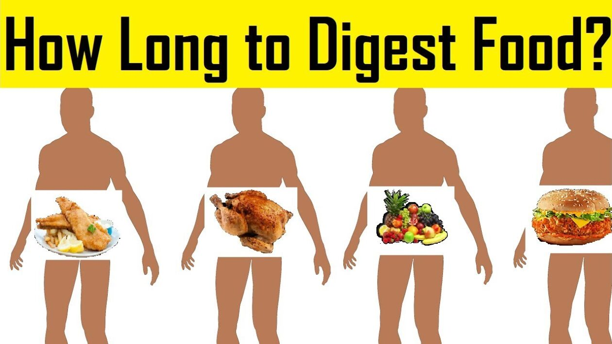 How Long Does it Take to Digest Food