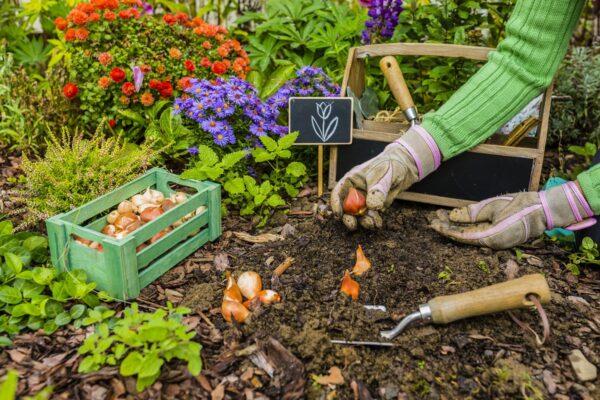 Vegetable Seed Sowing